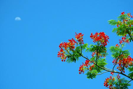 aloe flower: genus Aloe flower with blue sky background