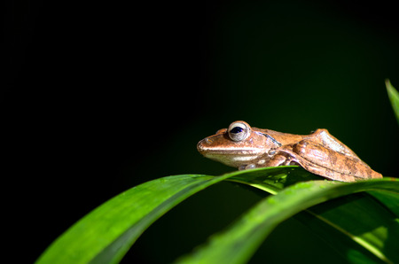 stay in the green: close up of small brown frog that stay on green leafs