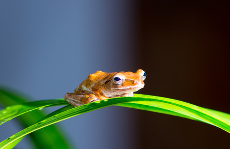 stay in the green: small brow frog stay on green orchid leaf