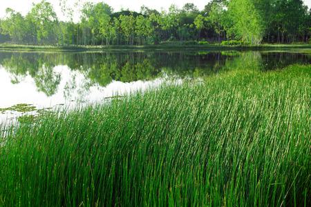 abound: Landscape of lake with grassland