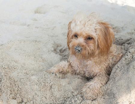 sennen: puppy dog  on beach