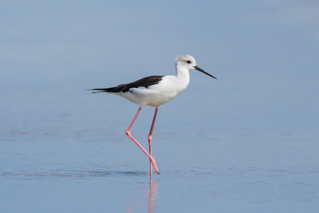 Shorebird relaxing in the sea Stok Fotoğraf