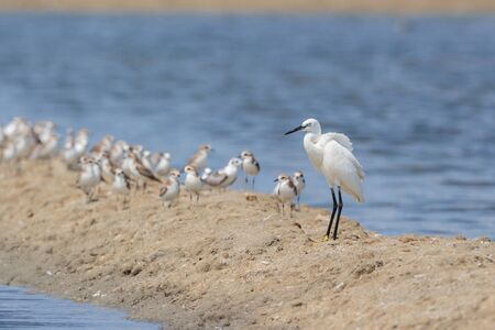 shorebird: Shorebird relaxing in the sea Stock Photo