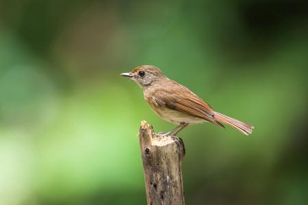 brown bird on the bough Stok Fotoğraf