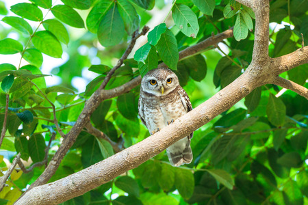 Small owl bird on tree Stok Fotoğraf