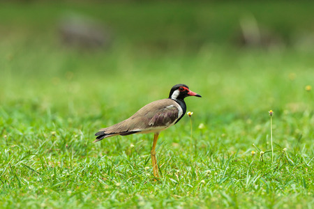 brown bird on the grass