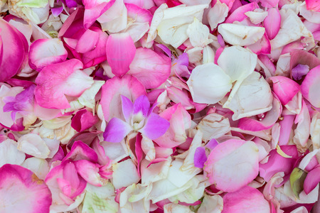 Pink and white rose petals on the ground