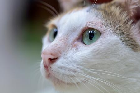 Selective focus cat eyes  by macro lens used focal length