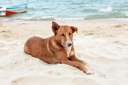 Brown dog relaxing on beach
