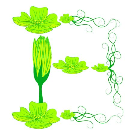 green it: font green flower B it all have green color.