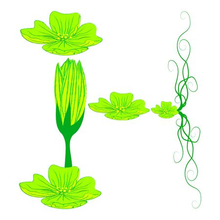 green it: font green flower H it all have green color.