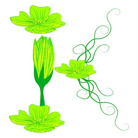 green it: font green flower K it all have green color.