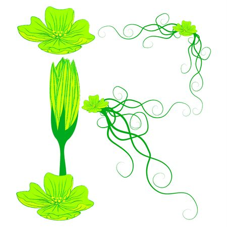 green it: font green flower R it all have green color.