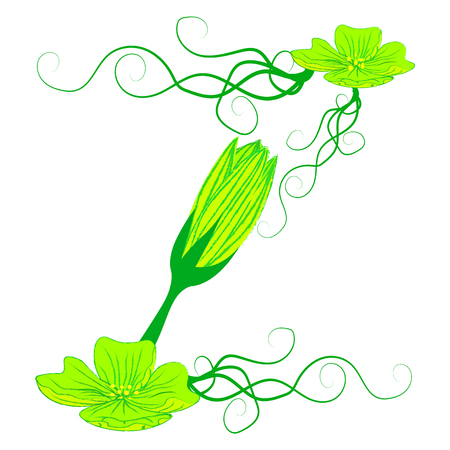 green it: font green flower Z it all have green color.
