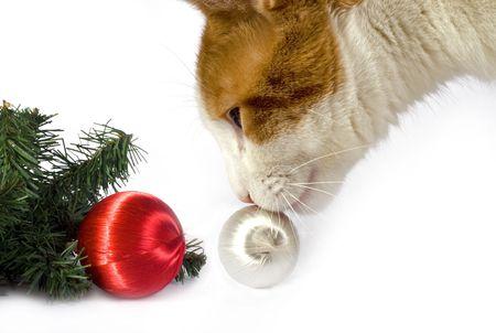 A cat investigates a few Christmas decorations. Banco de Imagens - 4011217