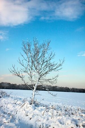 grinstead: Winter scene in East Grinstead Stock Photo