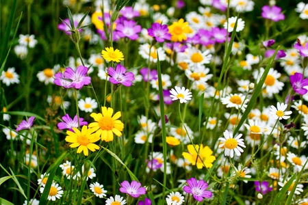 wildflowers: English country garden Stock Photo