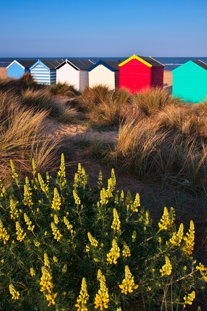 Colourful beach huts on Southwold beach Suffolk photo