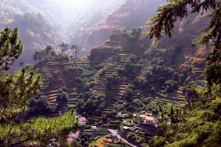 portugal agriculture: Madeira terraces