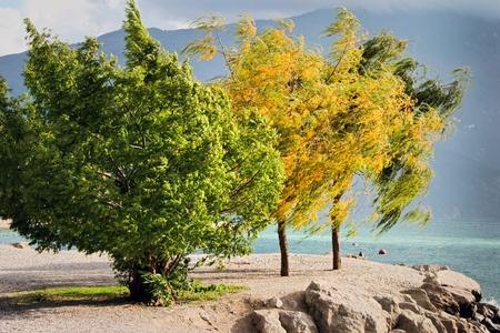Wind blown trees at Riva Del Garda on the shore of Lake Garda Italy photo
