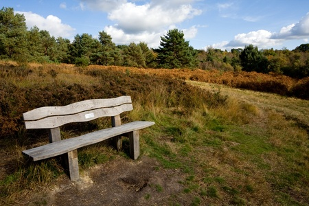Bench in ashdown Forest photo