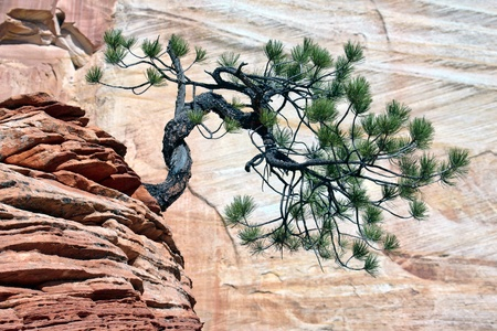 Stunted tree on rocky outcrop photo