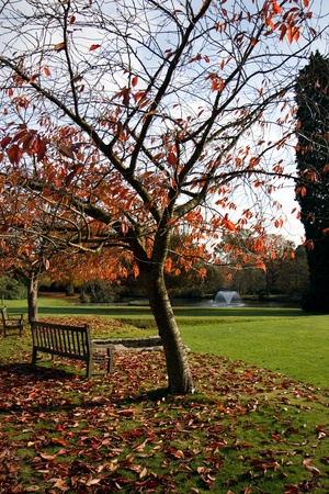 Trees in the grounds of the Ashdown Park Hotel photo