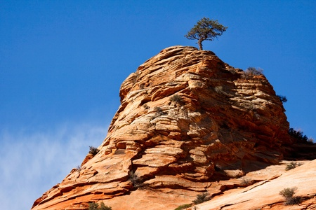 Pine tree growing on a rocky outcrop in Zion National Park photo