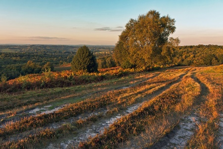 weald: A view of Ashdown Forest in East Sussex