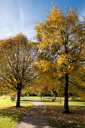 grinstead: Tulip trees (liriodendron tulipiferain) in East Grinstead