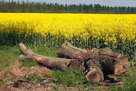 Rape in the Essex countryside photo