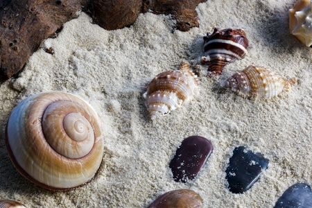 differnt: Shells and stones