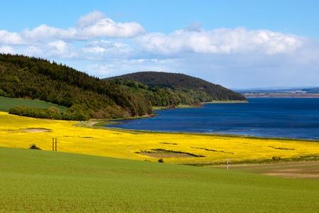 arable: Arable farming field near Munlochy Bay