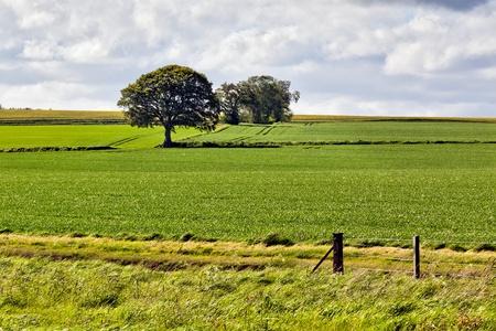 Arable farming field near Munlochy photo