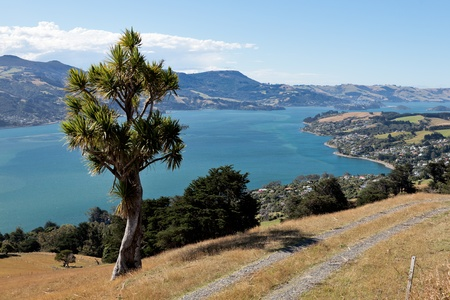 Otago Peninsula photo