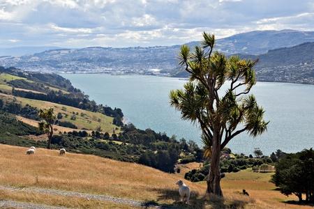 Otago Peninsula photo
