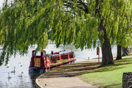 Narrow boat moored under a willow tree in Windsor photo