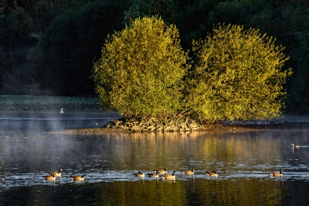 Early morning at Weir Wood Reservoir photo