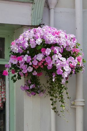 Beautiful hanging basket in a Dartmouth street photo
