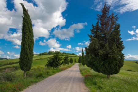 val d orcia: Cipressen in Val d'Orcia Stockfoto