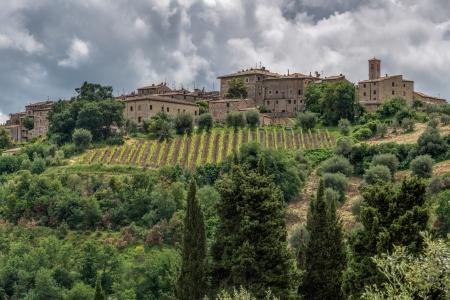 montalcino: View up to Montalcino