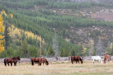 Horses in a field in Grand Teton National Park photo
