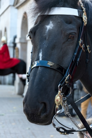 cavalry: Horse of the Queens Household Cavalry