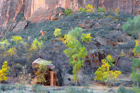 cottonwood  tree: Trees and boulders in Zion National Park