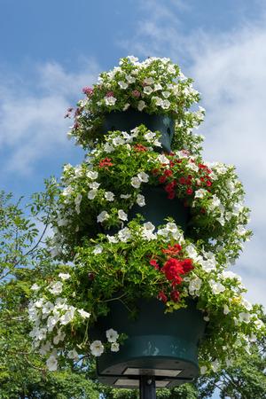 grinstead: East Grinstead in Bloom