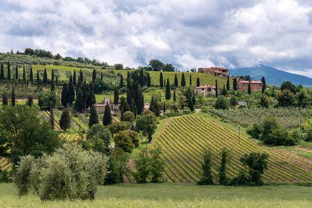 montalcino: Countryside around Sant Antimo Abbey in Montalcino Tuscany