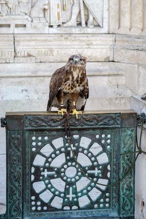 halaszbastya: Falco sul cancello alla base St Stephens statua Budapest