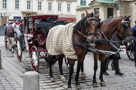 hackney carriage: Horse and carriage for hire in Vienna