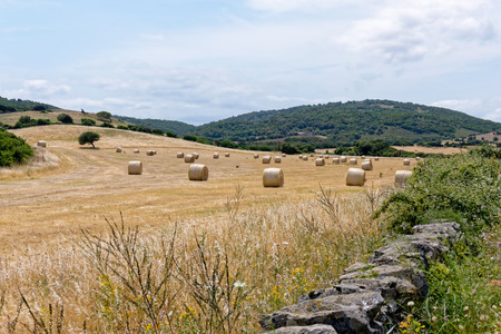 hayroll: Harvest in Sardinia