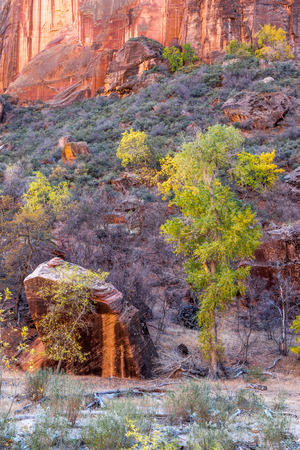 cottonwood canyon: Trees and boulders in Zion National Park
